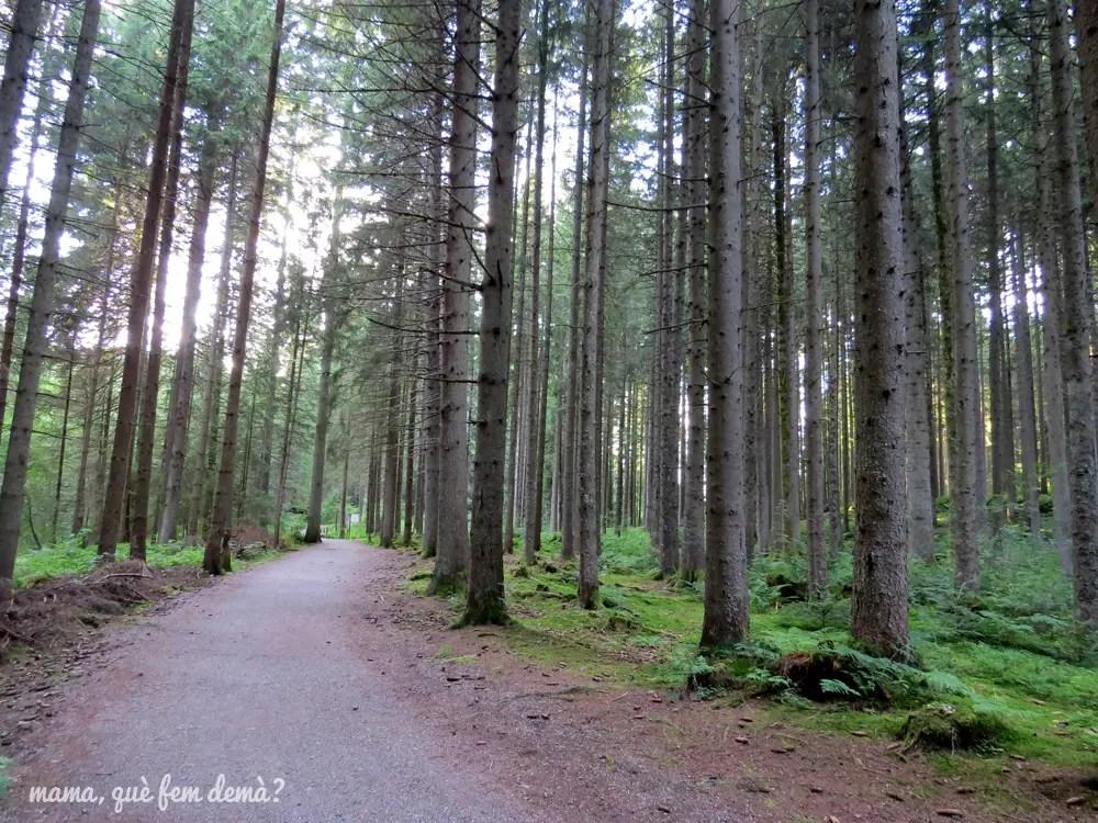 sendero por un bosque de altos árboles que va de Titisee al lago Eisweiher