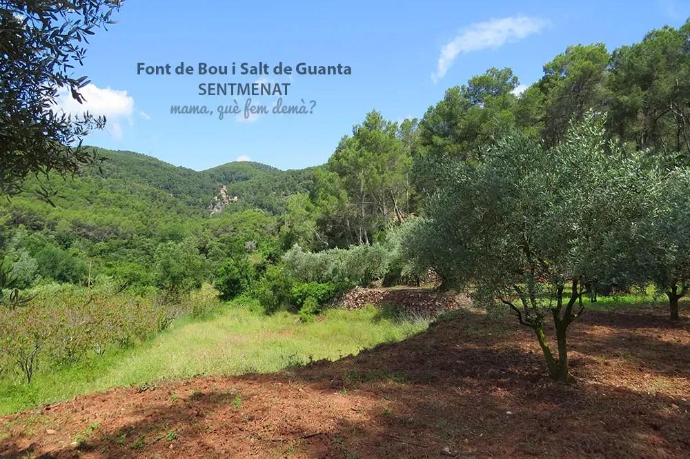 Vistas del Castell de Guanta a lo lejos desde los campos frutales de la Masia Can Senosa