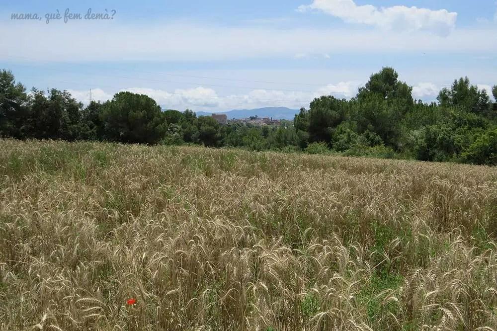 Vistas de lejos de Sentmenat y del Castillo de Senmenat desde un campo de trigo