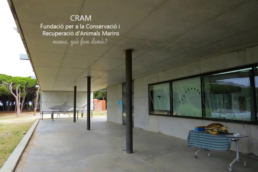 Las tortugas del CRAM, el centro de recuperación de animales marinos