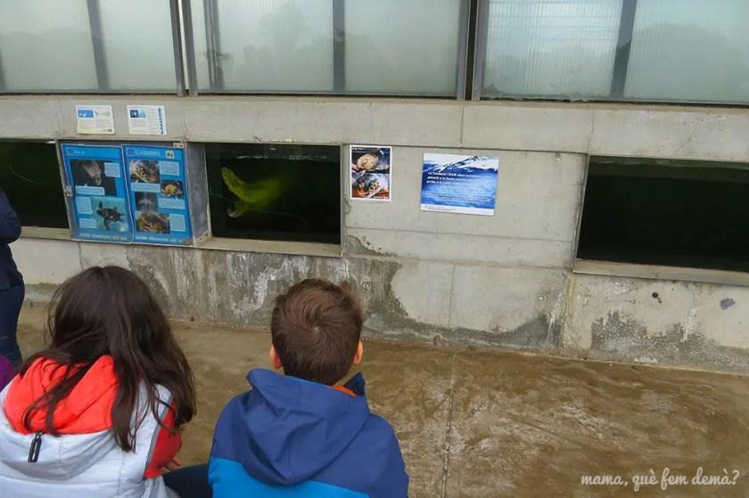niños mirando las tortugas marinas residentes del cram
