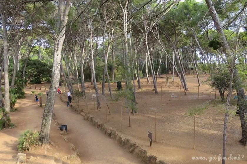 Vistas del bosque de los gamos desde el mirador en el Parc Samà