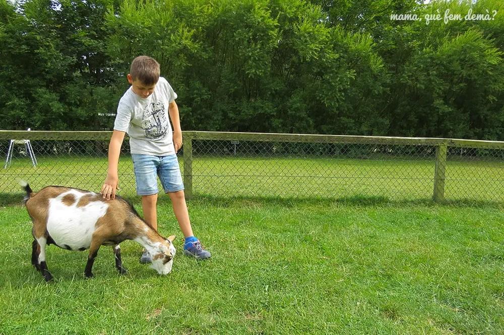 niño acariciando una cabra en Givskyd Zoo