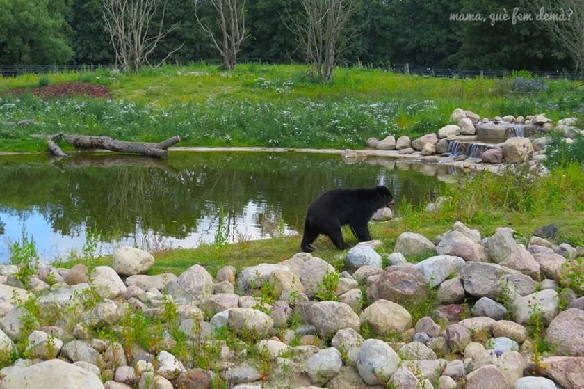 osos en Givskyd Zoo