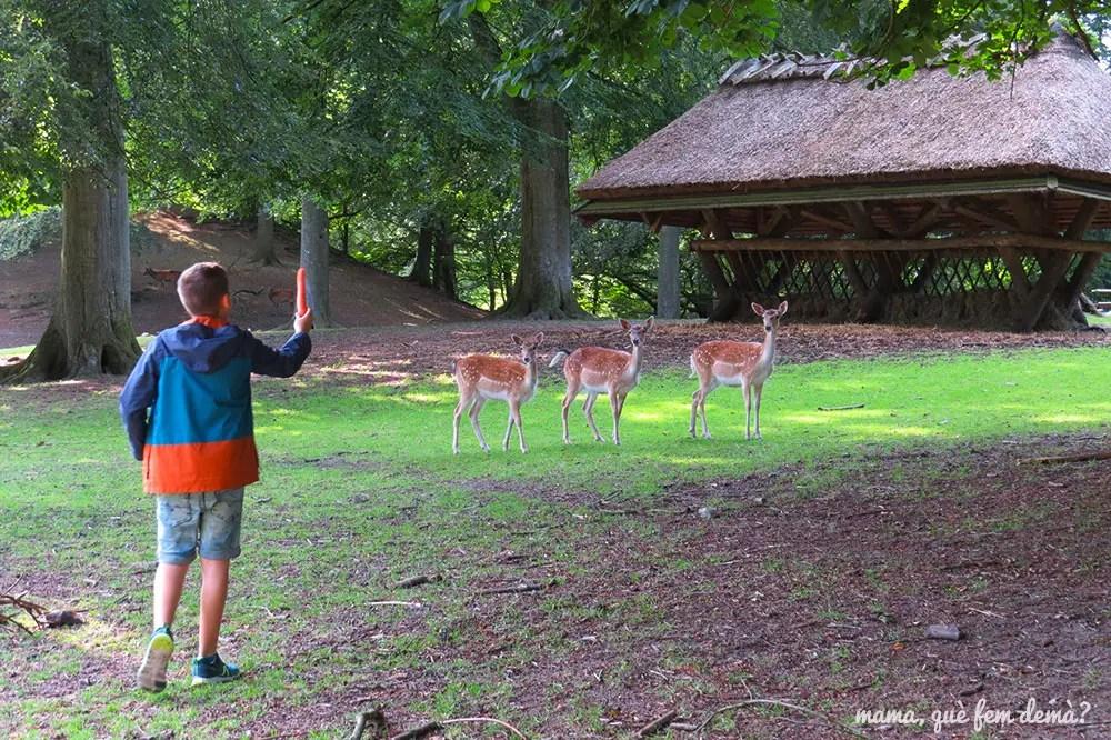 niño enseñando una zanahoria a los ciervos del parque Marselisborg