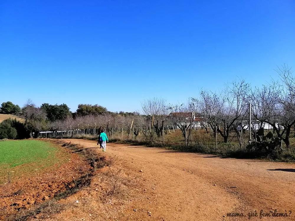 bifurcación de caminos en el Parc Agrari de Sabadell