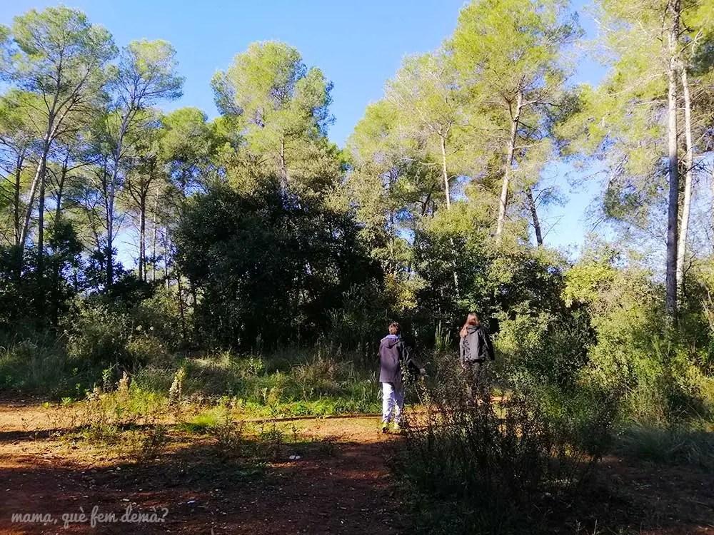 bifurcación en el bosque del Parc Agrari de Sabadell