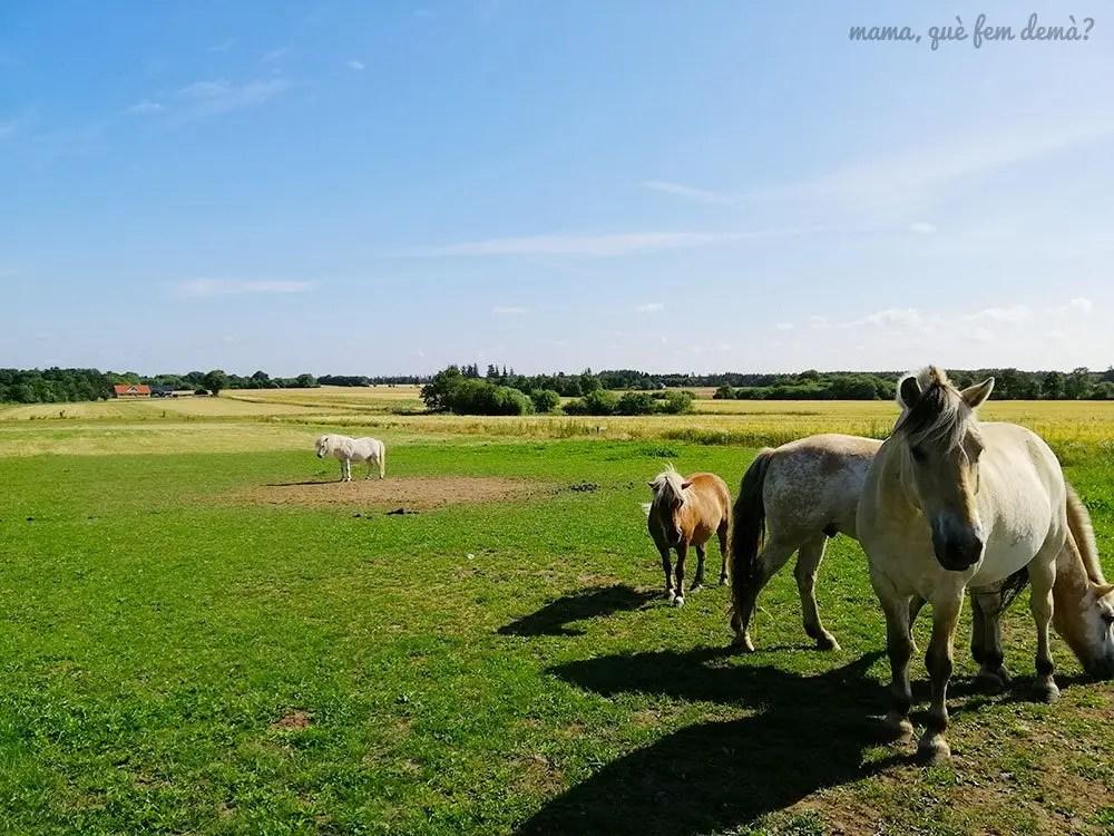 caballos en los apartamentos Fitting Landsbyferie en Vorbasse