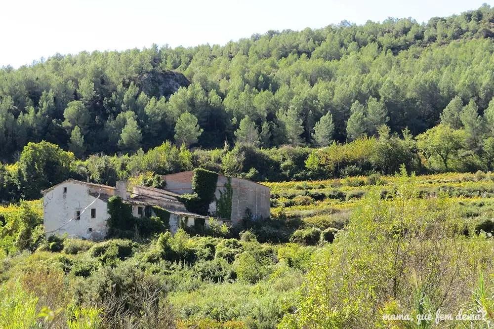 masía de les Valls de Foix rodeada de viñedos