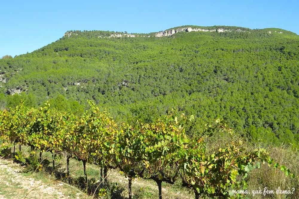 Viñedos y montañas de Cal Magí en Torrelles de Foix