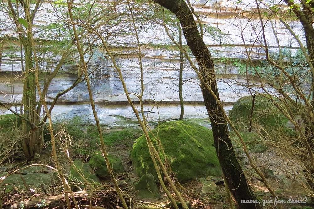 Bosque verde y pareces de piedra blanca en el camino que va al Gorg Negre de Santa Cecilia de Voltregà