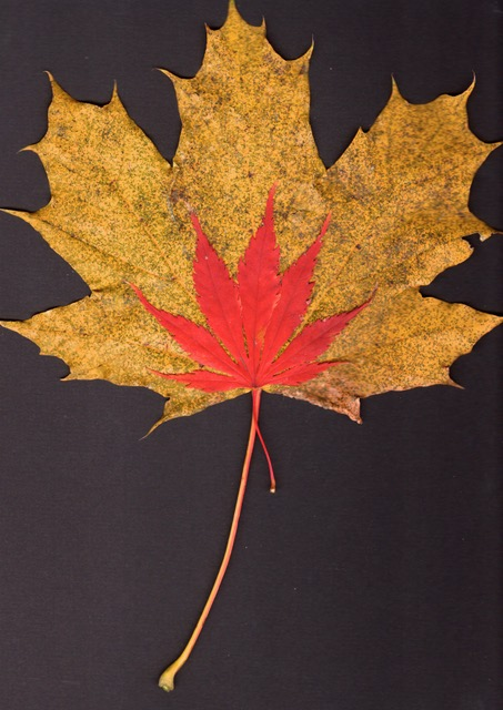 """Carol Pfeffer, Autumn composed dyptch, Scan, 8.5""""x11"""", $35 each, 2/$50"""