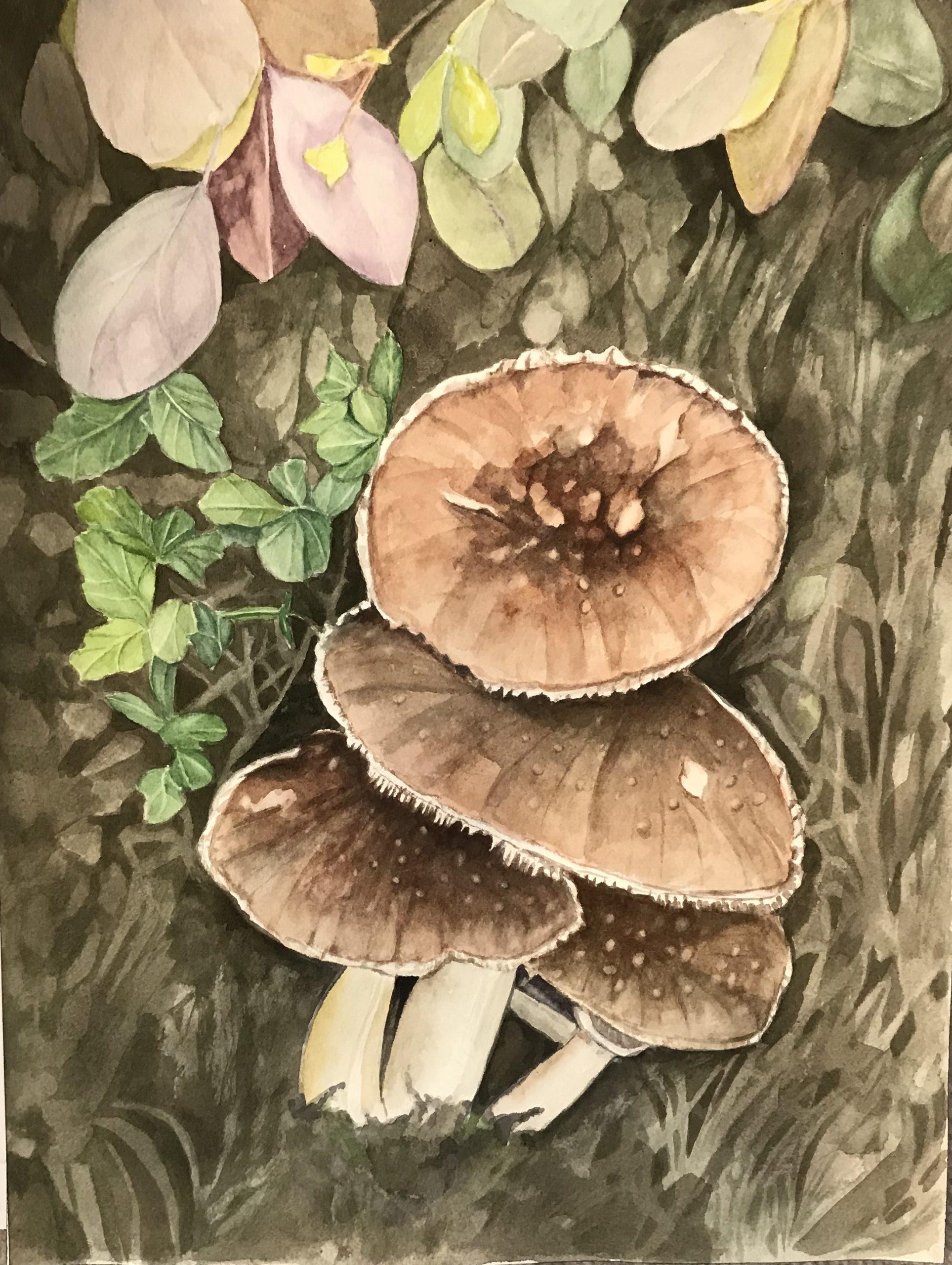 """Lorie Gurian, Mushrooms, Watercolor, 12""""x16"""", $300"""