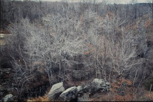 "Ellen Valle, The Quarry, Photograph, 16""x20"", $450"
