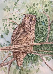 """Lori Gurian, Owl, Watercolor, 14""""x20"""", $300"""