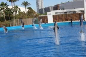 Oceanografic delfines Valencia