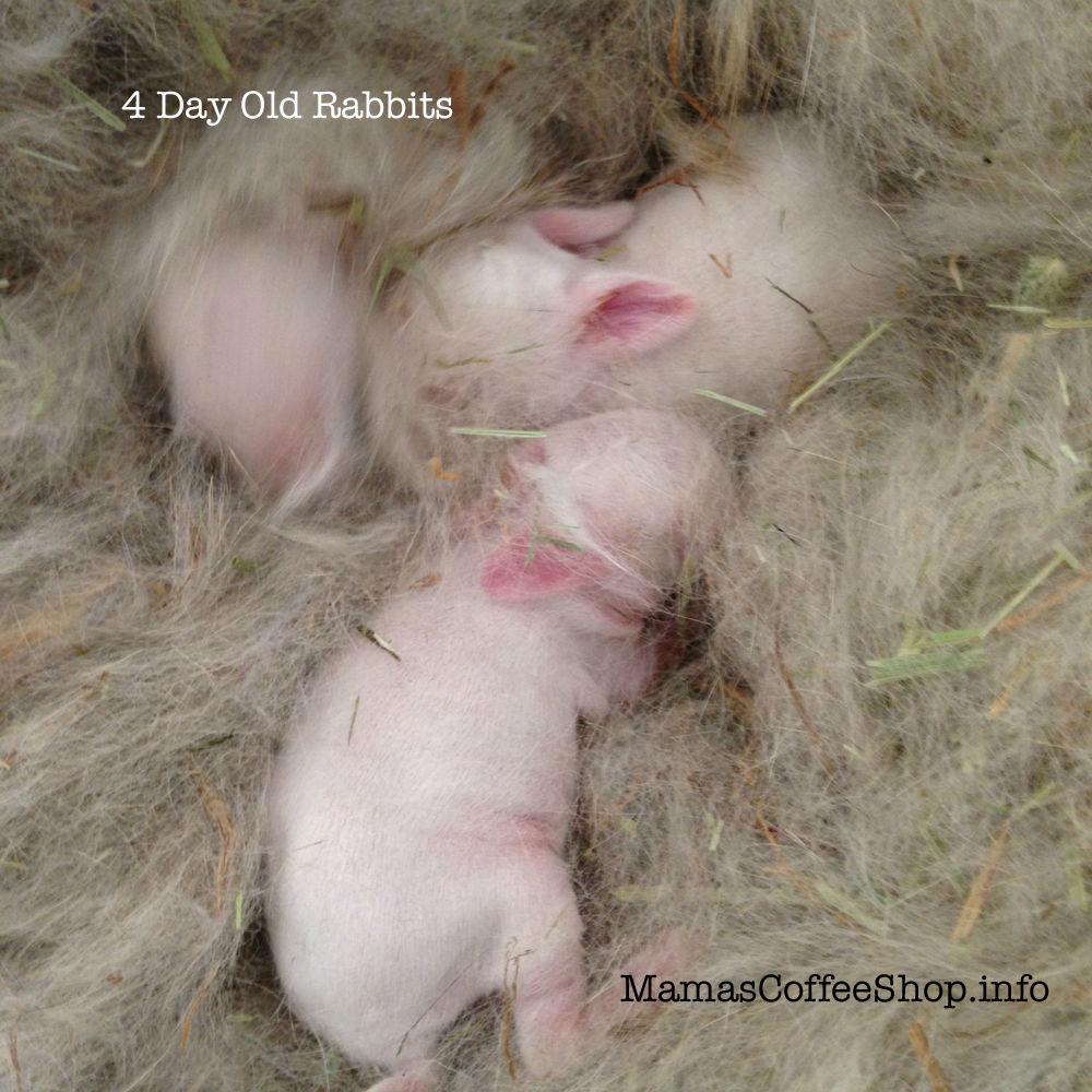 MamasCoffeeShop-Vs-4DayOld-5-8-15