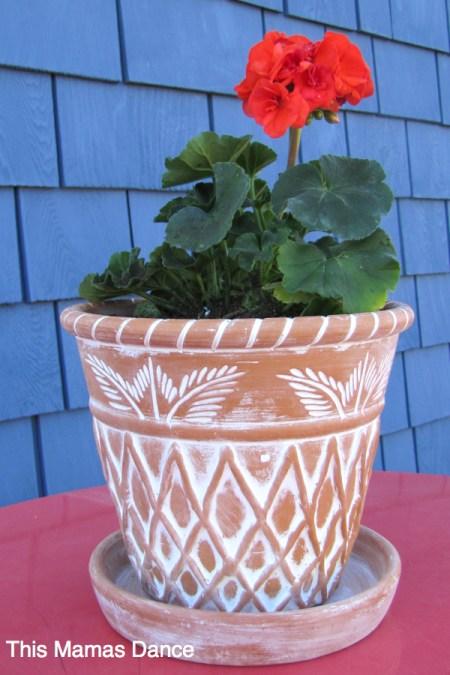 geranium detail
