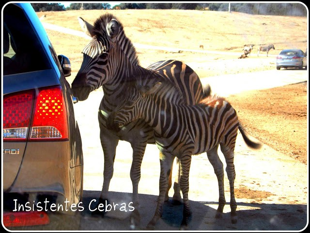 Mamás Full Time Safari aldea del fresno