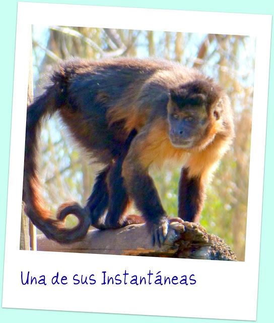 Faunia animales naturaleza Madrid