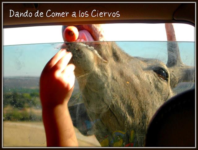 Safari Madrid Animales Comida