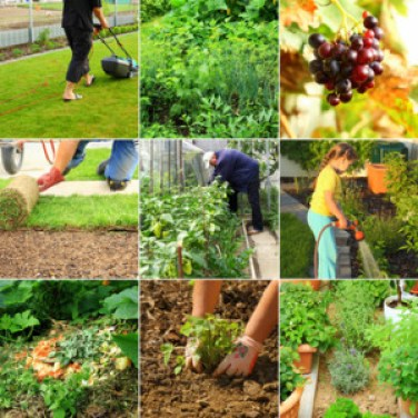 Growing your own clean food