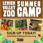 Lehigh Valley Zoo Summer Camps