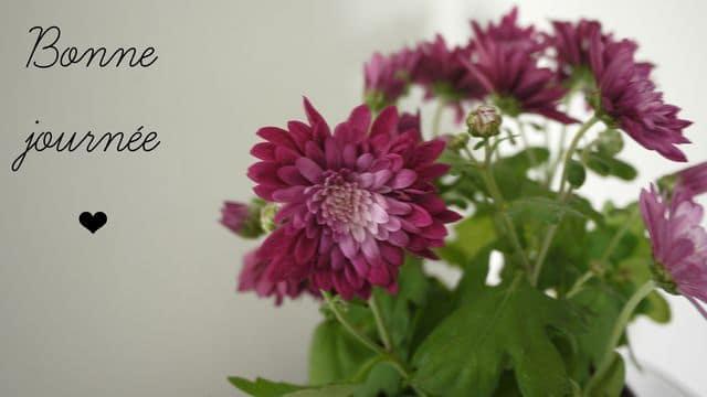 photo-fleurs-6