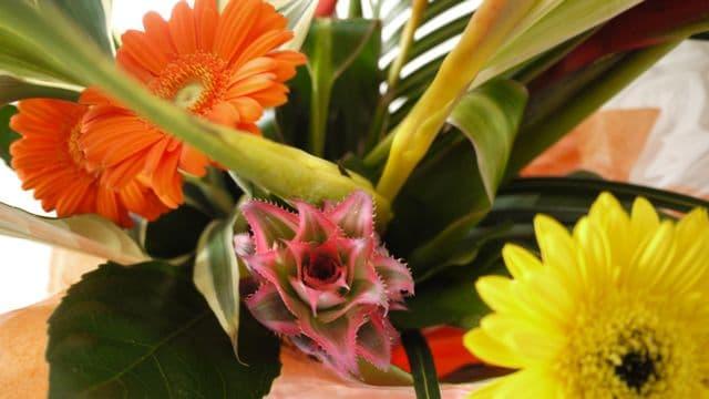 photo-fleurs-8