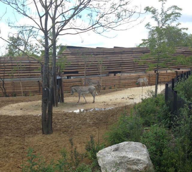 photos-zoo-de-paris-3