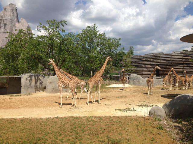 photos-zoo-de-paris