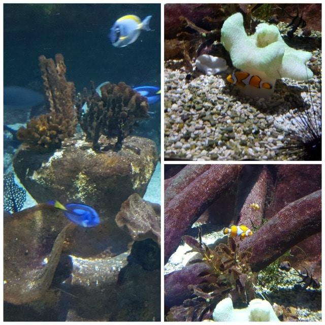 Avis aquarium Sealife 6