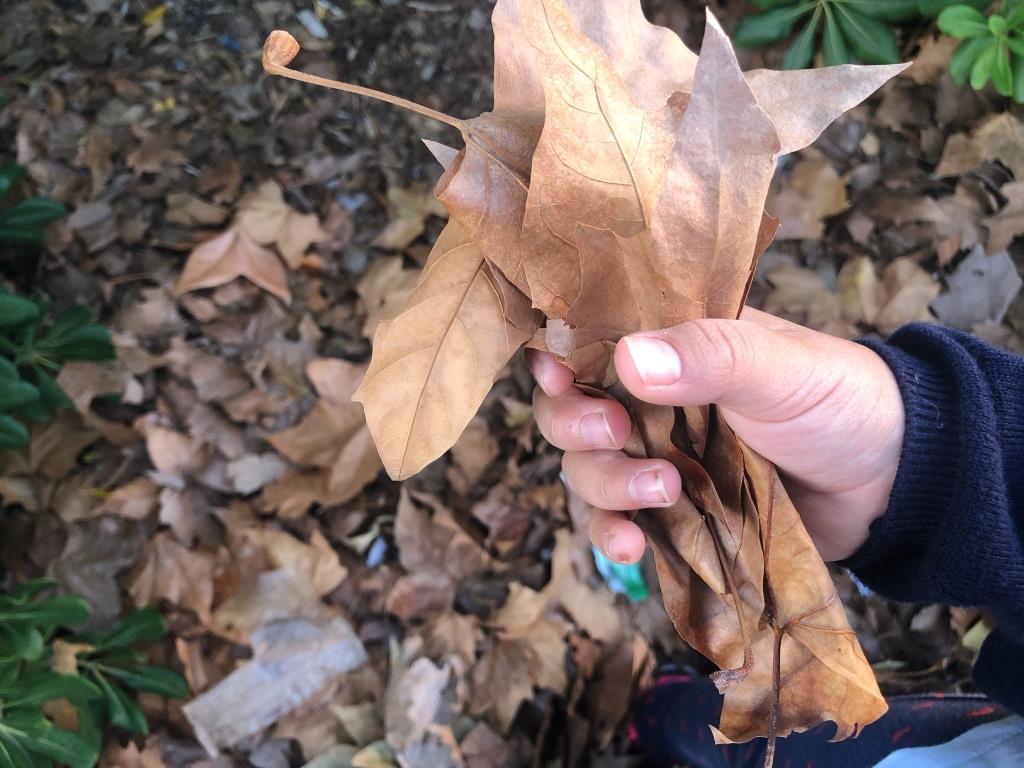 estrujar hojas secas, actividad sensorial de otoño