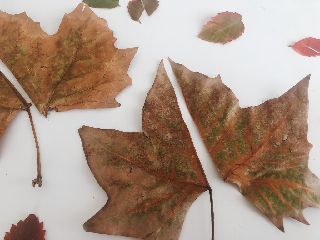 puzzles de hojas secas