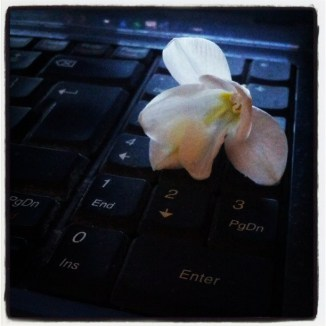 White flower, black keyboard