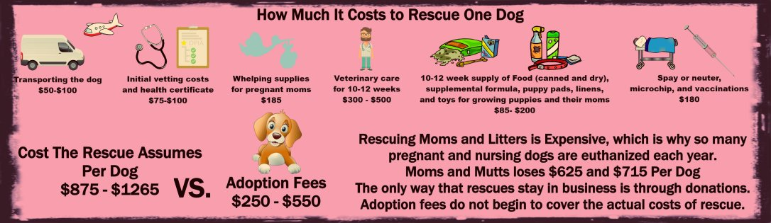 How Much Rescue Costs 2