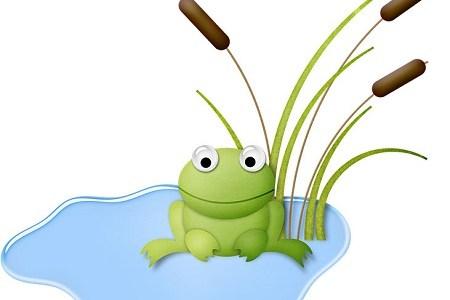 田んぼのカエルはどこから来る?実は生態はあまり知られてない?