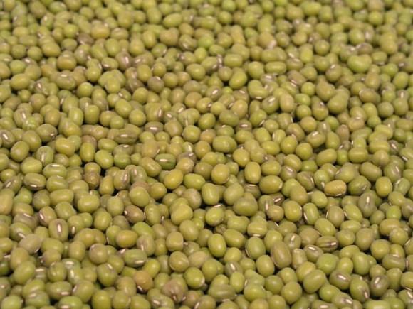 緑豆の画像