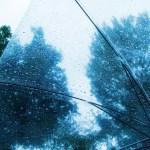 梅雨の画像