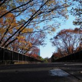 代々木公園の歩道橋の紅葉