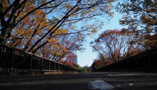 代々木公園の紅葉の見ごろとアクセス情報【2018年版】