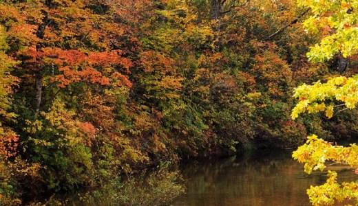 光が丘公園の紅葉の見頃とアクセス情報