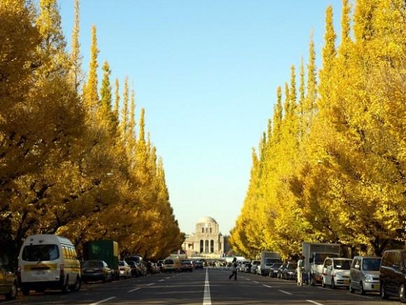 神宮外苑銀杏並木の画像
