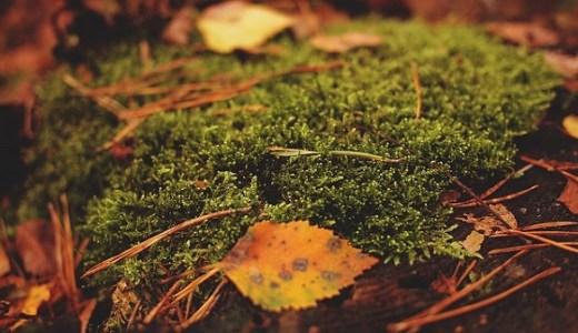 深秋の候の使う時期と意味。簡単な文例は?