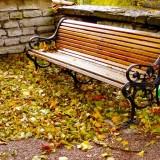 落ち葉とベンチ