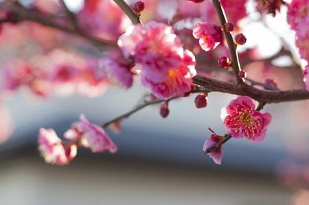 春寒の候の使う時期はいつ?意味や簡単な文例は?