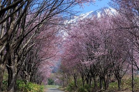 春日の候の意味と読み方、使う時期はいつ?