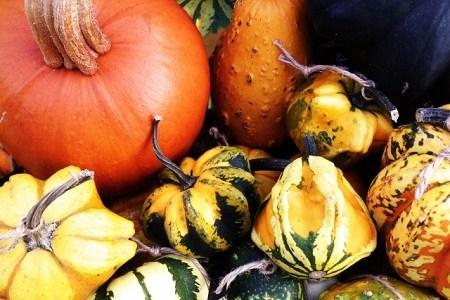 かぼちゃの種類は大きく分けて4つ! それぞれの品種を簡単に紹介!