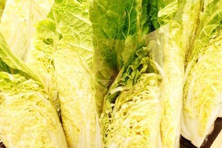 白菜の最適な保存方法は冷蔵・冷凍・常温どれが一番日持ちする?