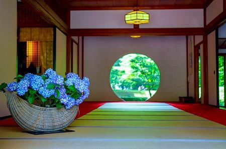 北鎌倉の明月院がなぜあじさい寺と呼ばれているのか?理由は?